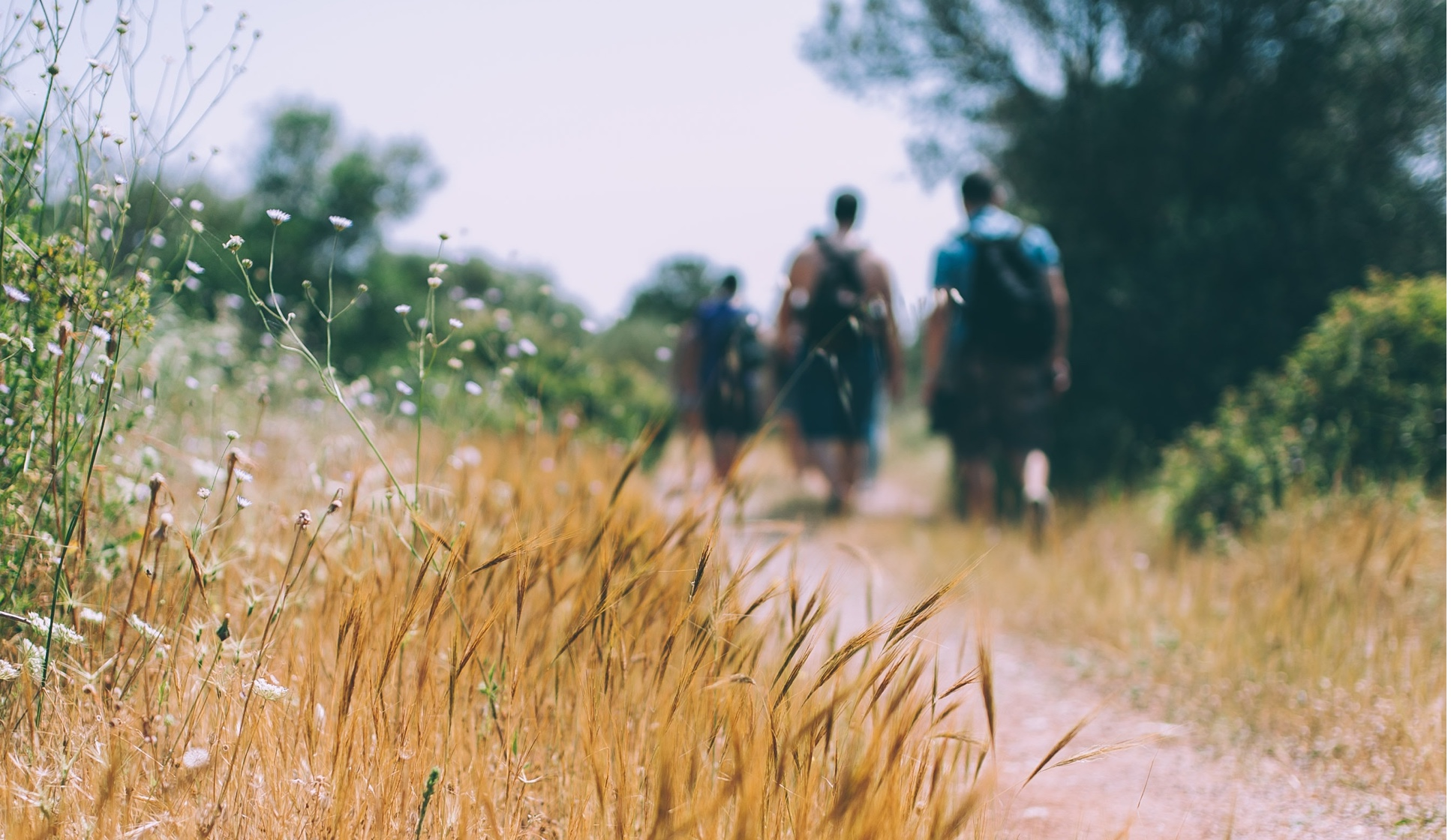 People walking on trail with wildflowers and backpacks